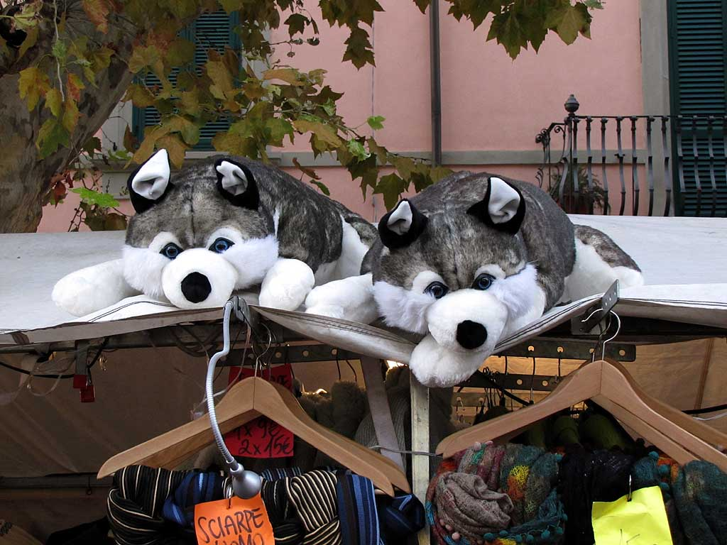 Fluffy huskies, food market, Livorno