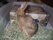 Rabbit 08/01/07