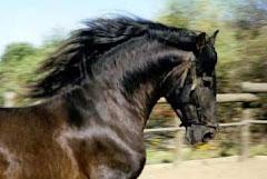 En Homenaje a mi caballo GORRION