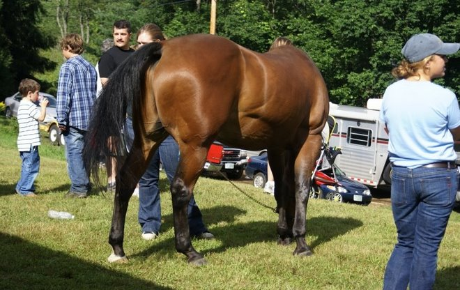 A Handsome Horse at the Cornish Fair