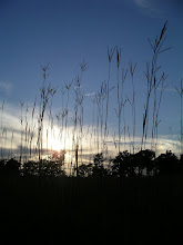 Big Bluestem at Sunset