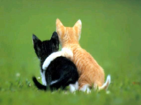 nerjes et yasmin des fidels chats qui sont amis. Black Bedroom Furniture Sets. Home Design Ideas