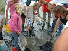 Excursies op Schiermonnikoog