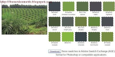Plant Color Scheme