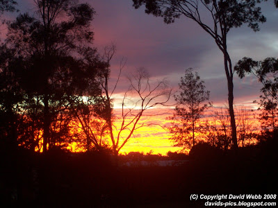brilliant red sunrise with trees - australian gum trees in the foreground, layers of bright red and pink to blue clouds in the background