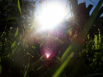 morning sun shining over green grass close up