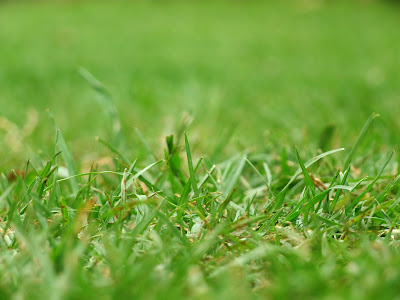 Green blades of grass close up - on the grass lawn - wordless wednesday