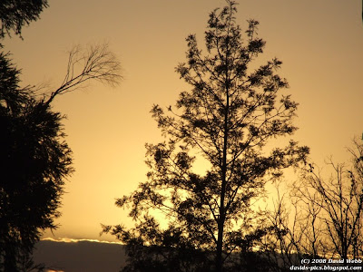 Golden Sunrise - Trees silhouetted and golden yellow-orange sky