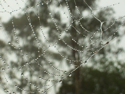 spider web with water droplets hanging off it