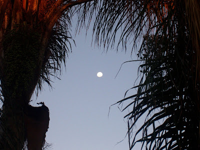 tropical palm trees framing the twilight moon