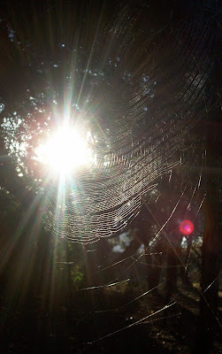 sun sending rays shining through a curved garden orb spider's web