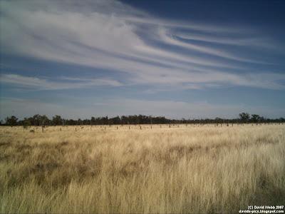 dry Australian landscape grazing field