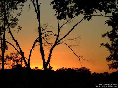 Orange Sunrise in Australia with Tree Silhouette