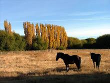 caballos en la estepa patagónica
