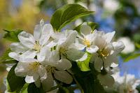 Árboles en flor a principios de febrero