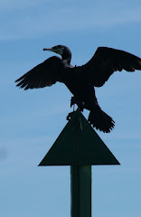 Cormorant On The Barrel Post