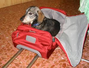 Camillo, il mio cane