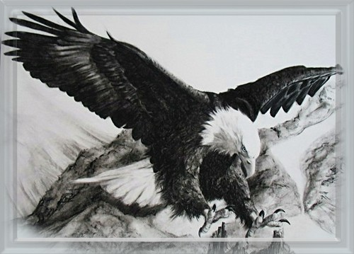 How To Draw An Eagle Landing