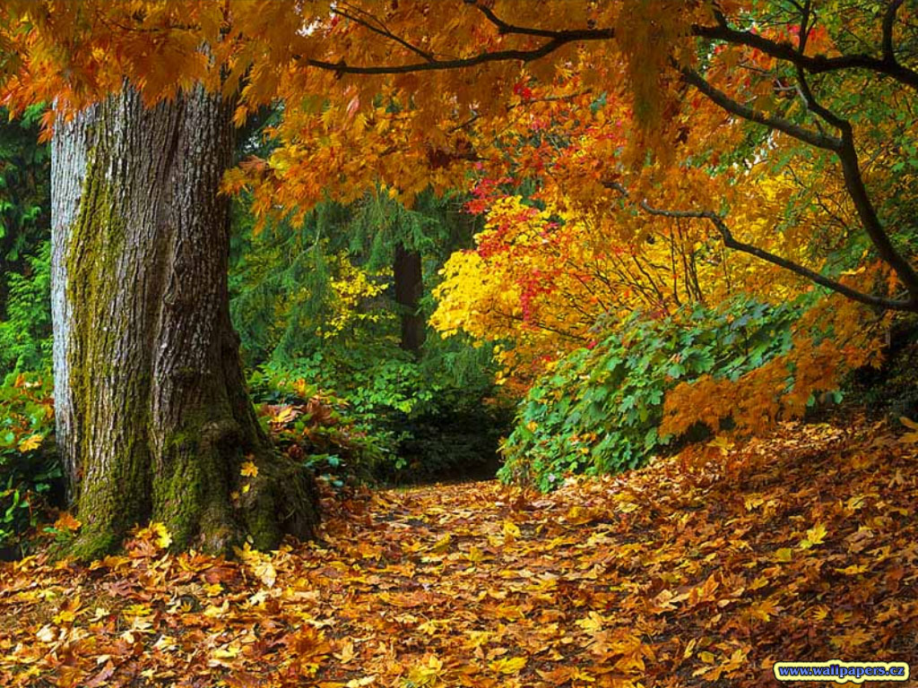 Spring Of Autumn: Colours Of Autumn