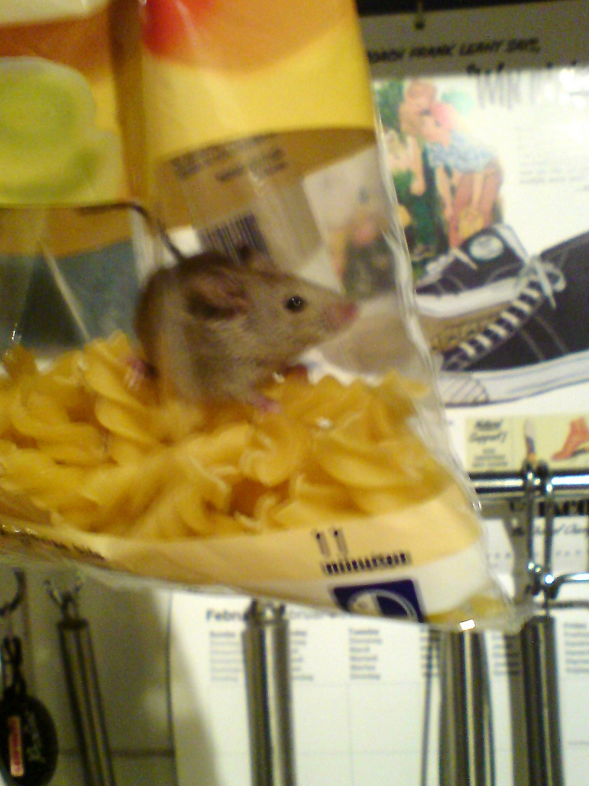 fusilli mouse 4