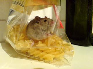 fusilli mouse