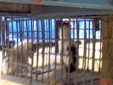 Crueldad Animal -   Los Circos