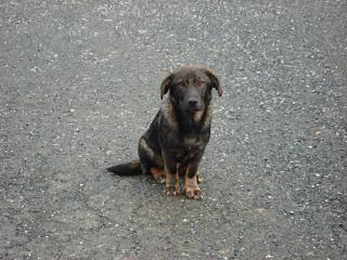 Historia de un perro abandonado