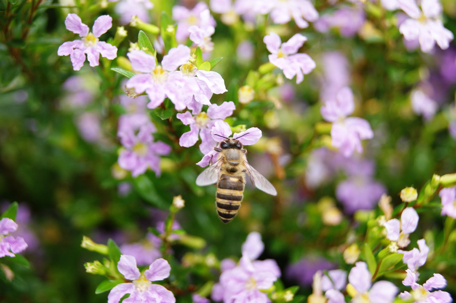 PhotoAjak Flora dan Fauna