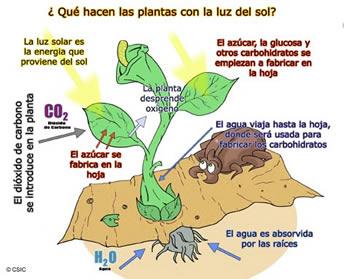 procesos de la fotosintesis