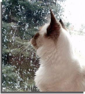 Tawnee's first glimpse of snow