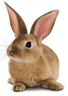 Telus Bunny
