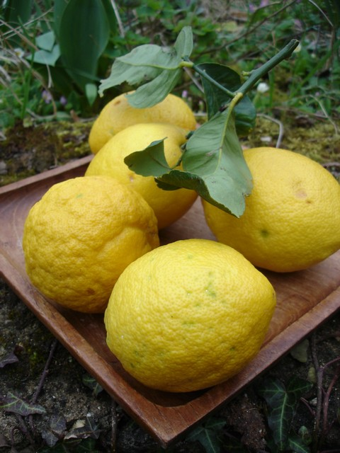 marmelade de citrons jaunes