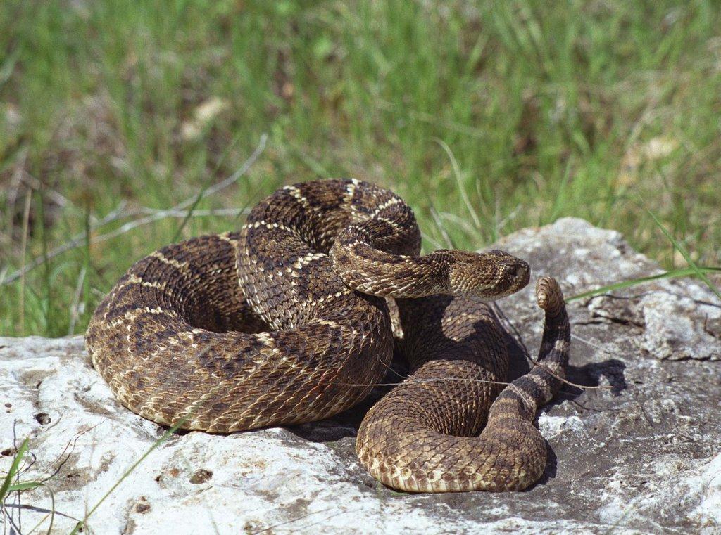 [nasty+snake.jpg]
