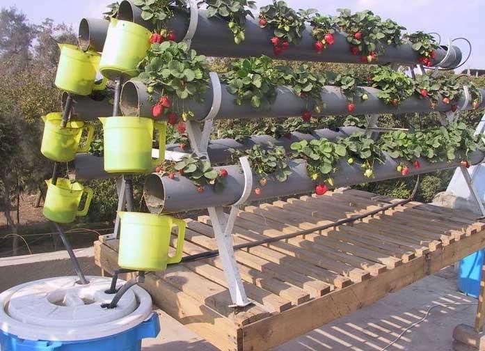 تحميل كتاب زراعة الخضروات