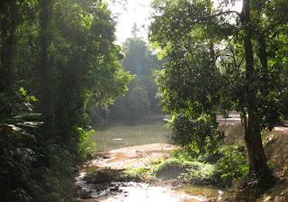 Jungle scene at Ton Sai Waterfall