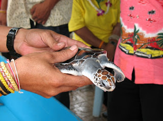 Turtle being given for release