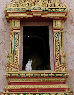 Cat in the window at Chalong Temple