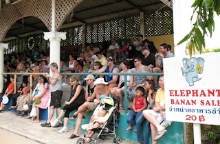 Huge crowds watch the elephant show