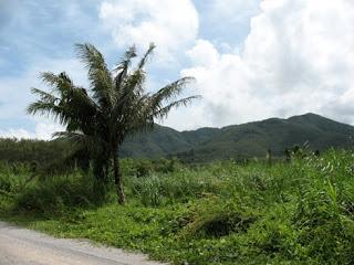 Manik view