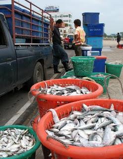 Fresh Fish, Prachuap Khiri Khan
