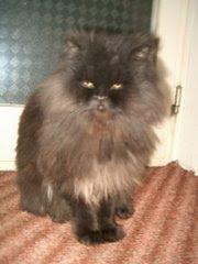 My cat, Eddie!!!