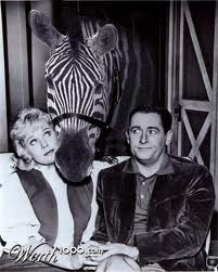 Was mister ed a zebra