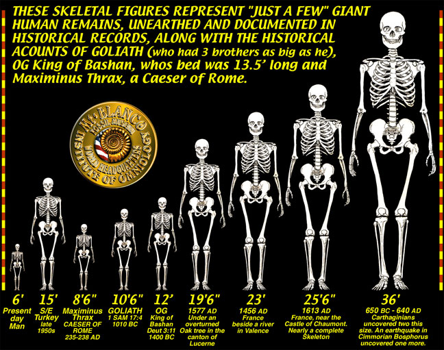 GIANT-SKELETONS-CHART.jpg