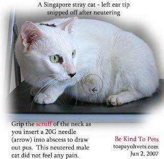 Normal Cat Ear Temperature