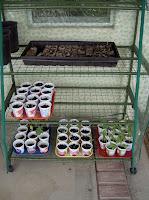 extending a short growing season - slowly harden off seedlings before transfering to the garden