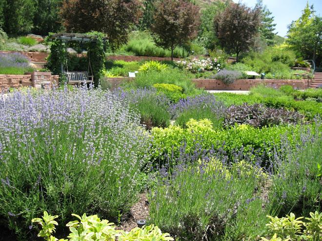 Spring Herb Garden