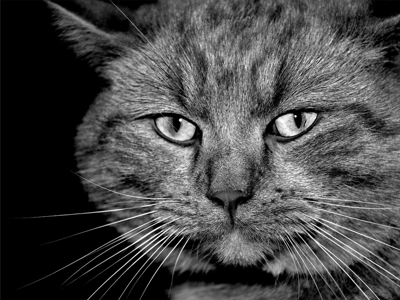 World Best Car Hd Wallpaper 1080p Tiptop 3d Amp Hd Wallpapers Collection Beautiful Cats