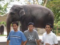 ini gajah