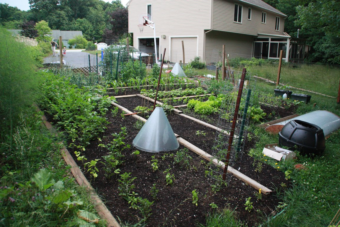 the clueless gardeners - a garden blog: what a difference a vacation