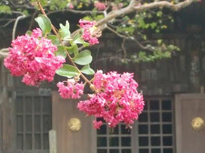 宝戒寺のサルスベリ